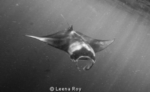 Manta by Leena Roy 